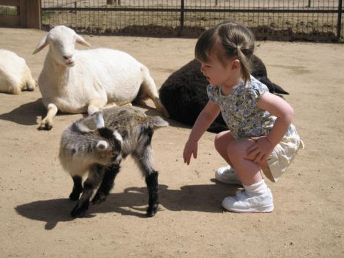 arizona-scottsdale-rawhide-petting farm
