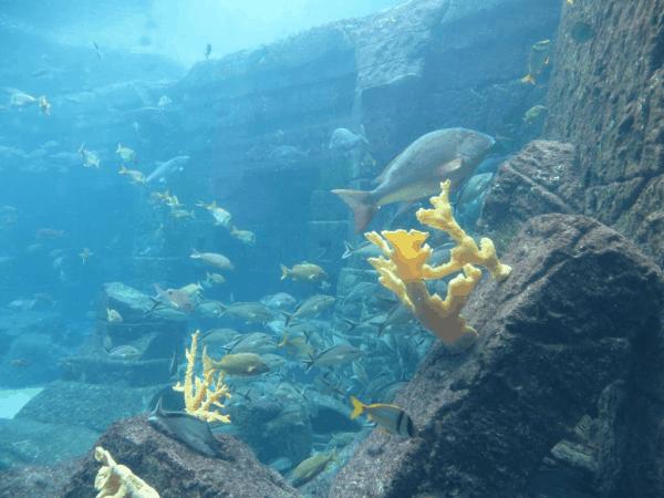 Bahamas-Atlantis-Dig aquarium