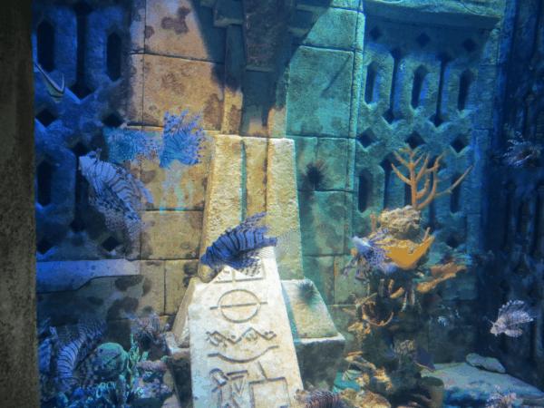 Bahamas-Atlantis-Dig aquarium-zebra fish