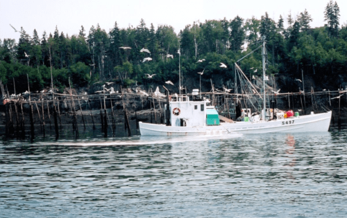 new brunswick-bay of fundy-herring weirs