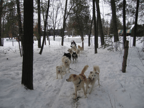 chateau montebello-dogsledding