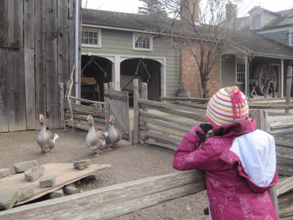 Farmyard at Black Creek Pioneer Village