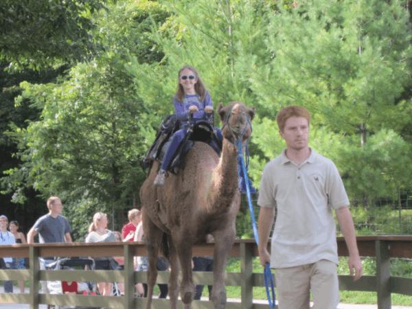 riding camel at Toronto Zoo