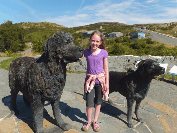 newfoundland-st. john's-newfoundland and labrador dogs