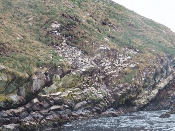 Newfoundland-Witless Bay