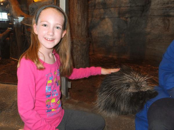porcupine at Science North, Sudbury