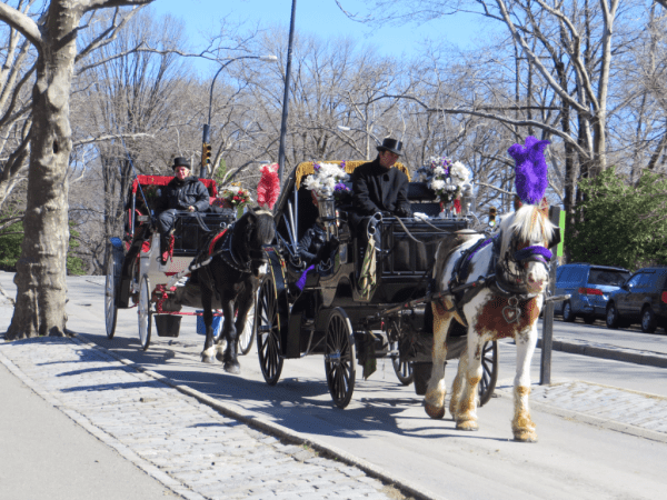 New York City-Central Park carriages