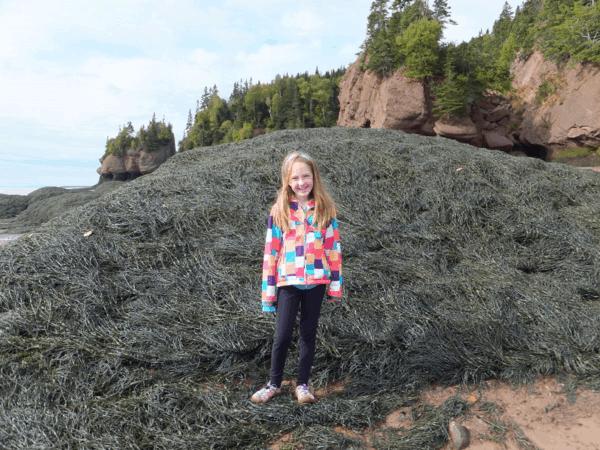 Seaweed on ocean floor - Hopewell Rocks-New Brunswick