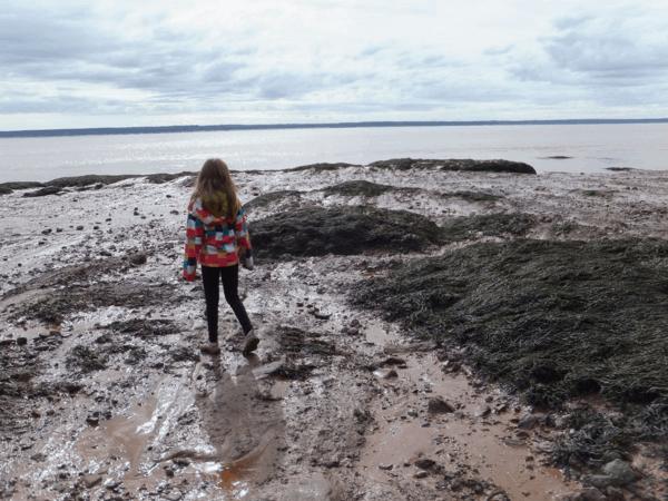 New Brunswick-Exploring ocean floor at low tide - Hopewell Rocks