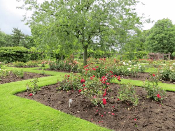 Centennial Rose Garden - Royal Botanical Gardens