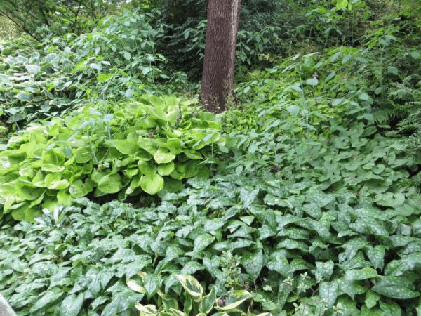 Woodland plants at Royal Botanical Gardens