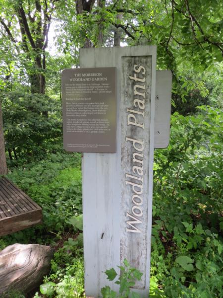Morrison Woodland Garden at Royal Botanical Gardens