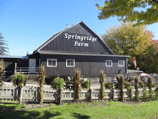 Ontario-Springridge Farm
