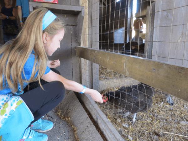 Ontario-Springridge Farm - Animal Barn