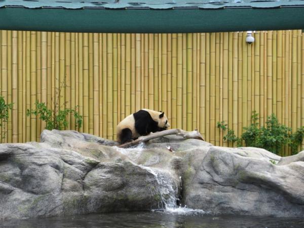 Toronto Zoo-pandas
