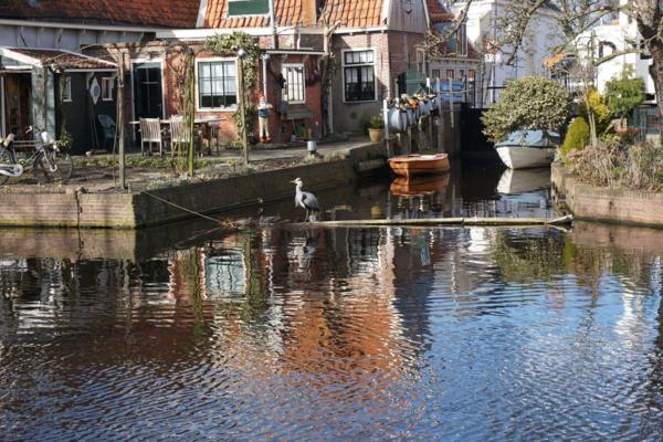 Netherlands-edam-canal-heron