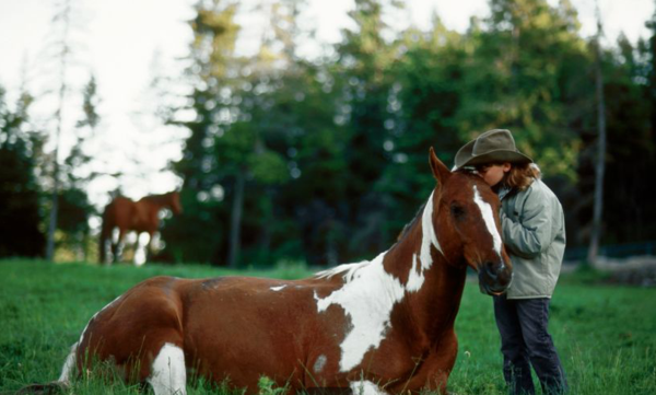 Spur alliance-flathead lake-child with horse