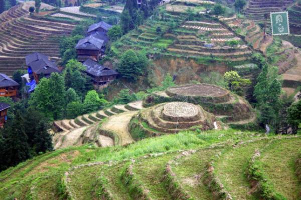 Longji Terraced Fields, Guilin