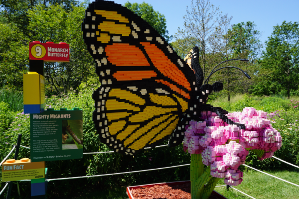 Ontario-royal botanical gardens-nature connects exhibit-monarch butterfly