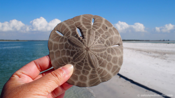 Florida-Shell-Island-seashell