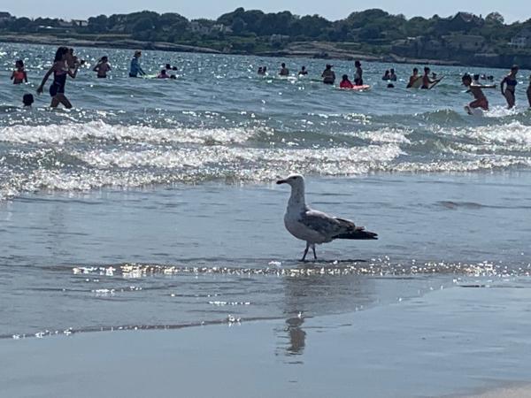Newport-Rhode Island-beach