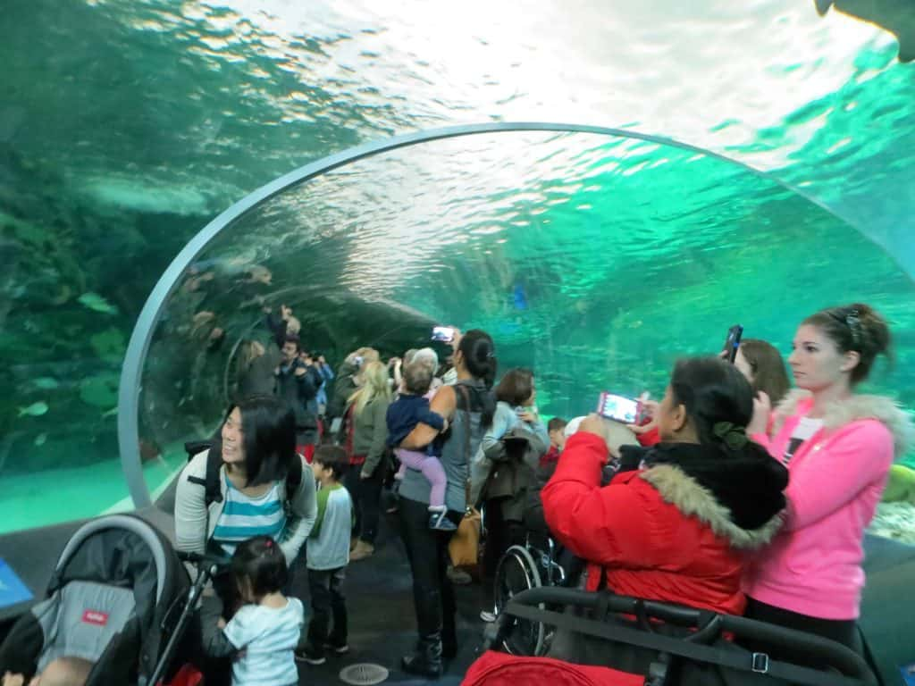 ripley's aquarium toronto-shark tunnel
