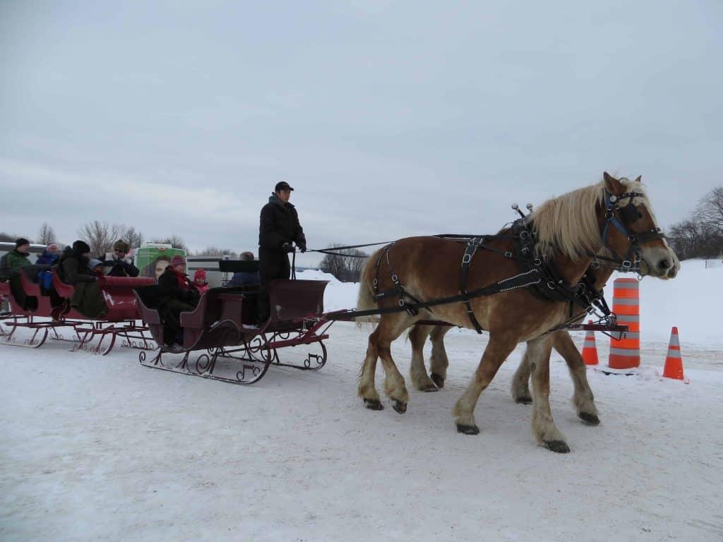 quebec winter carnival-sleigh ride